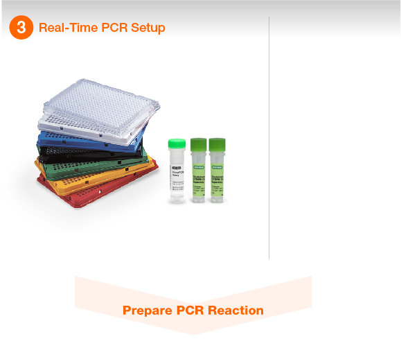 Real-Time PCR Setup