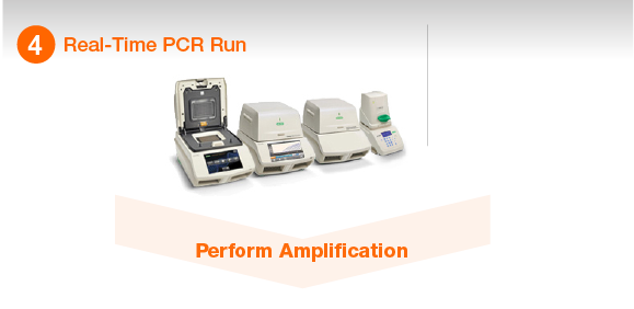 Real-Time PCR Run