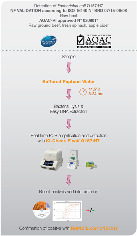 Iq Check 174 E Coli O157 H7 Pcr Detection Kit Food Science