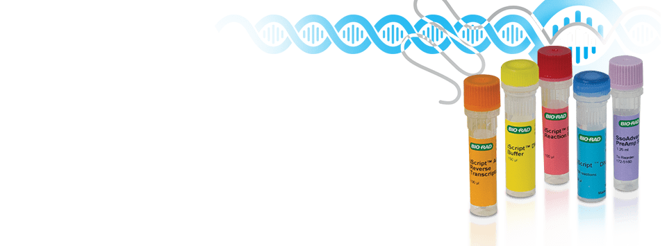 Long noncoding RNA Workflow