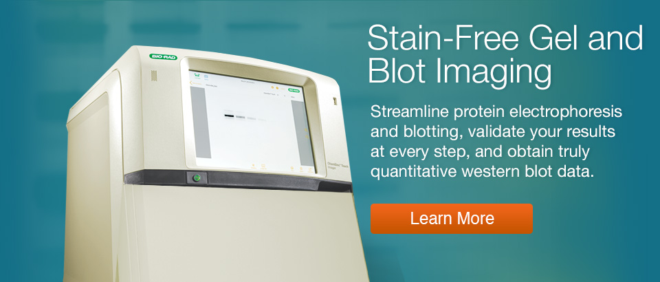 Stain Free Technology