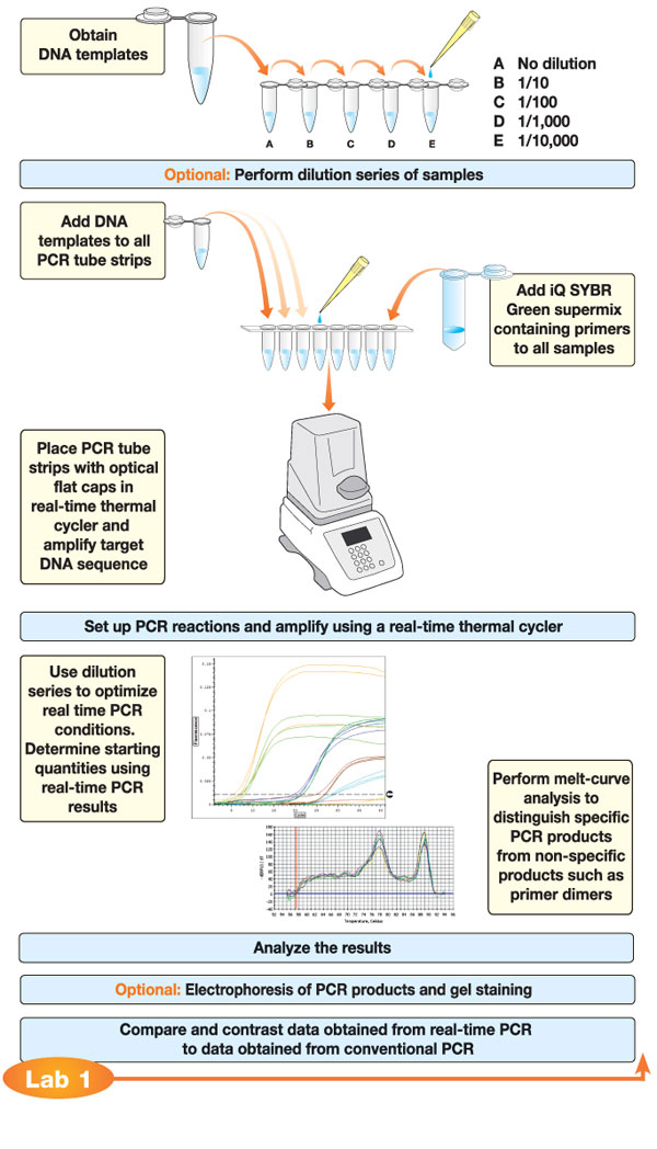 Real-Time PCR Flowchart