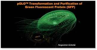 pGLO Transformation and Green Fluorescent Protein Chromatography Kits