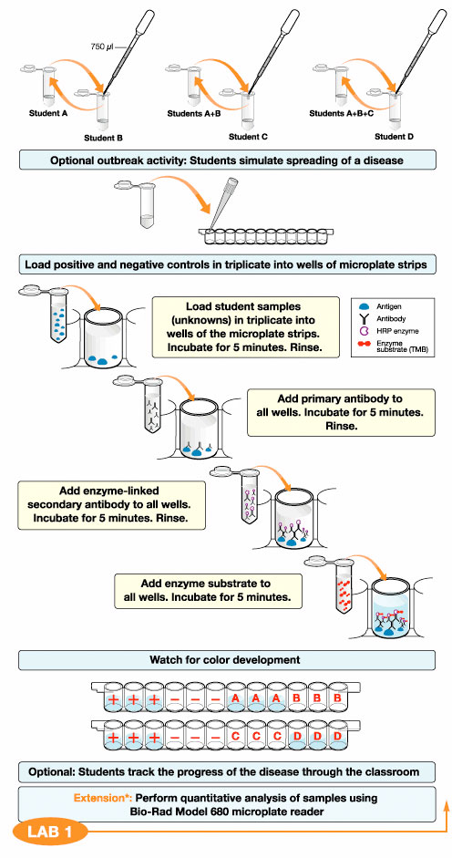 ELISA Immuno Explorer Kit Flowchart