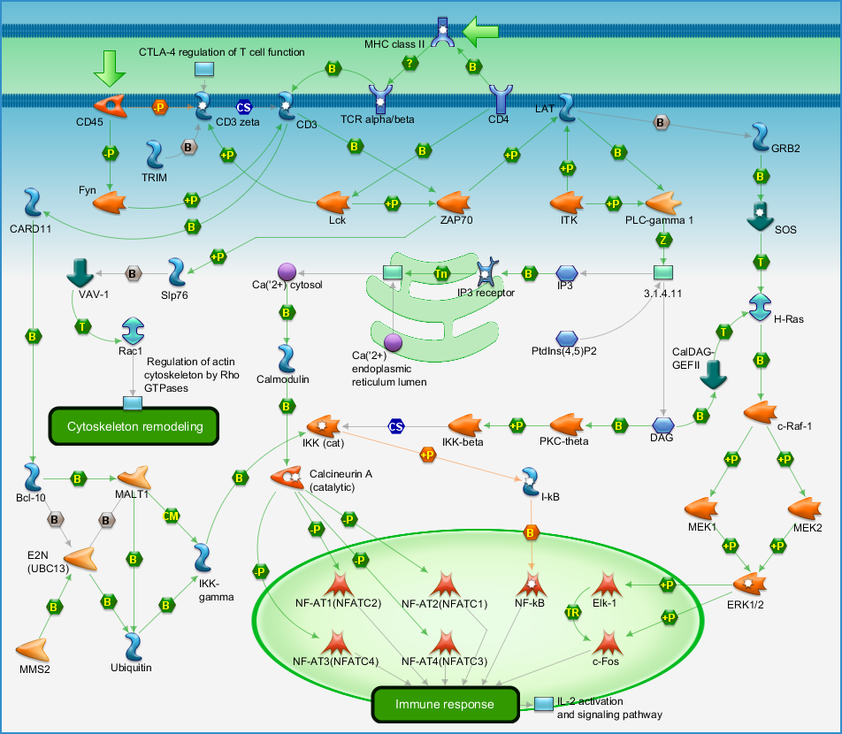Immune Response T Cell Receptor Signaling Pathway Map Diagram Image Maps Photo