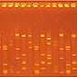 Introduction to PCR Analysis