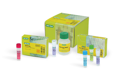 PCR Core Reagents (PCR Enzymes and Buffers)