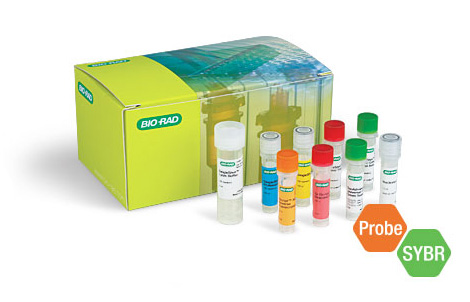 Single Shot Cell Lysis RT-qPCR Kits