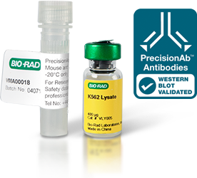 PrecisionAb™ Validated Western Blotting Antibodies