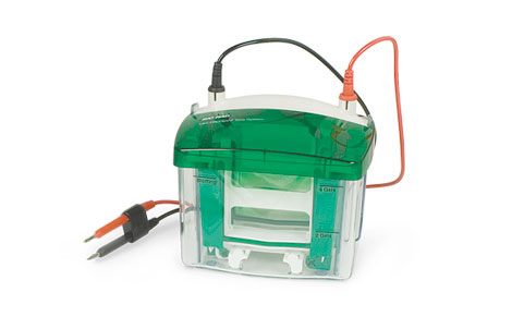 Mini-PROTEAN Tetra Cell Systems - Electrophoresis Chambers