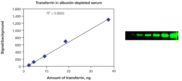 Transferrin in albumin depleted serum