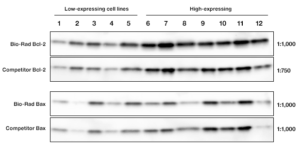 Side-by-side testing of anti-human BCL-2 and Bax antibodies with 12 different cell lysates