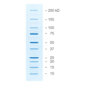 Precision Plus Protein™ Unstained Standards