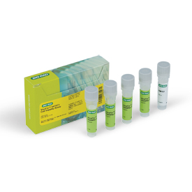 VivaFix™ 547/573 Cell Viability Assay