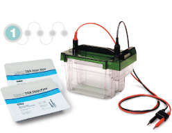 Photo of protein electrophoresis gel box and precast gels-separation transfer and analysis
