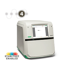 Photo of Bio-Rad ChemiDoc™ MP System (front)-separation transfer and analysis
