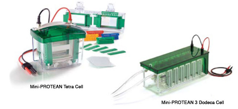 Mini Electrophoresis Systems