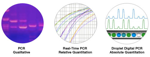 Digital PCR represents a third generation of PCR that enables absolute quantification of target sequences
