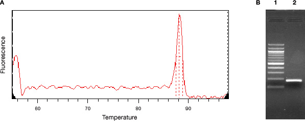 Melting curve showing a single PCR product in a real-time PCR assay.