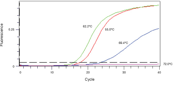 Amplification curves of PCR products in a real-time PCR assay.