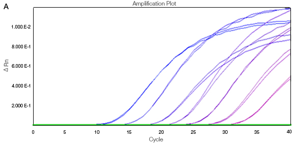 ΔRn vs. cycle without ROX normalization
