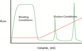 Gradient Elution