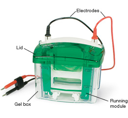 Components of a vertical electrophoresis cell