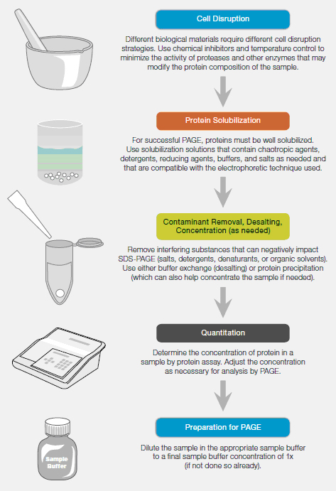 protein sample preparation workflow