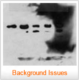 A blot with a blotchy background - Western Blot Doctor