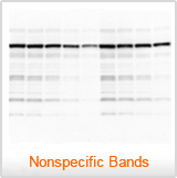A blot with non-specific bands - Western Blot Doctor