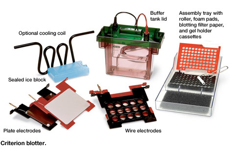 Types Of Western Blotting Equipment Cells Amp Power