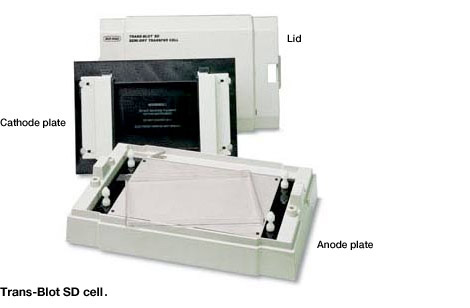 Trans-Blot SD cell