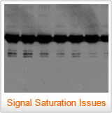 A blot with signal saturation - Western Blot Doctor