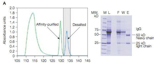 Protein A affinity purification and desalting profiles using 0.1 M citrate elution buffer