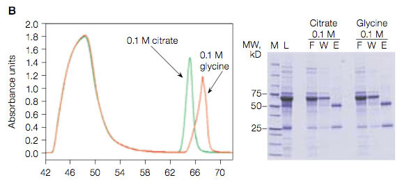 Comparison of protein A elution profiles using 0.1 M glycine, pH 3.0 and 0.1 M citrate, pH 3.0 elution buffers.