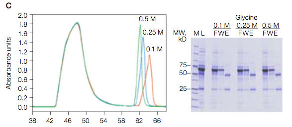 Protein A purification profiles using three concentrations of glycine, pH 3.0 (0.1 M; 0.25 M; 0.5 M) for elution