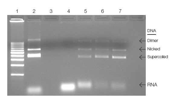 Analysis of plasmid DNA purified on UNOsphere Q support