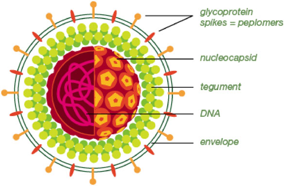 Bioplex 2200 Hsv 1 Hsv 2 Igg Clinical Diagnostics Bio Rad