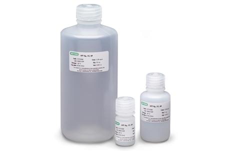 Alphafetoprotein Antigen (AFP)