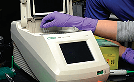 PCR Amplification Kit