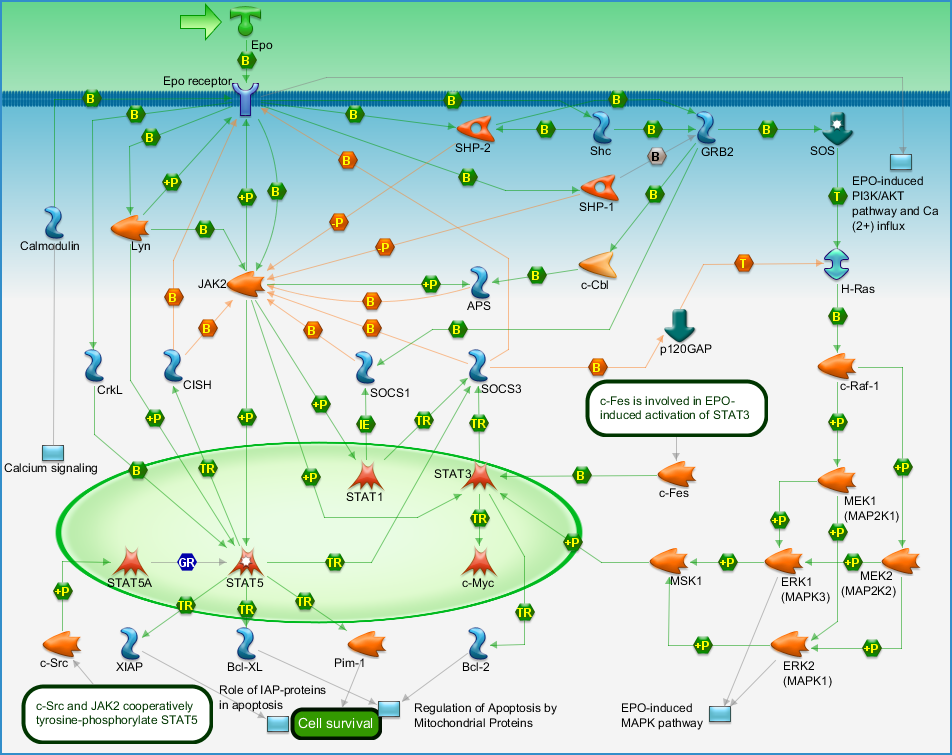 Development - EPO-induced Jak-STAT pathway Pathway Map - PrimePCR ...