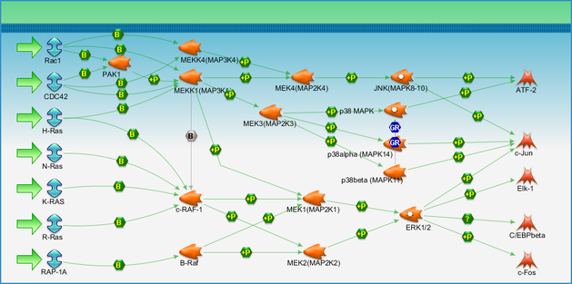Map2k1 Pathway.G Protein Signaling Ras Family Gtpases In Kinase Cascades