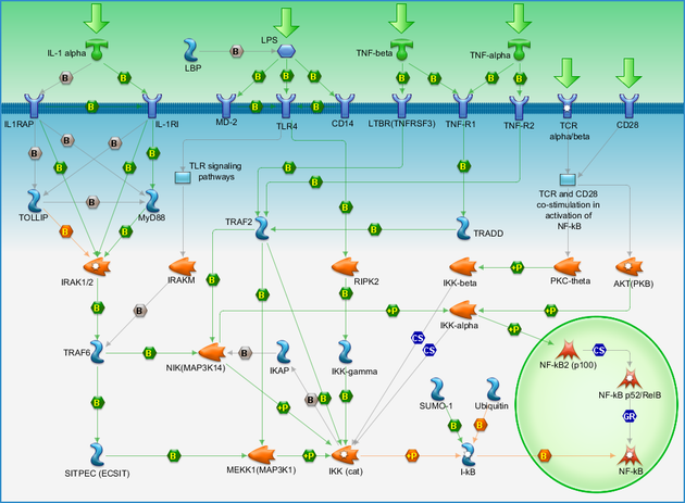 Transcription Nf Kb Signaling Pathway Pathway Map