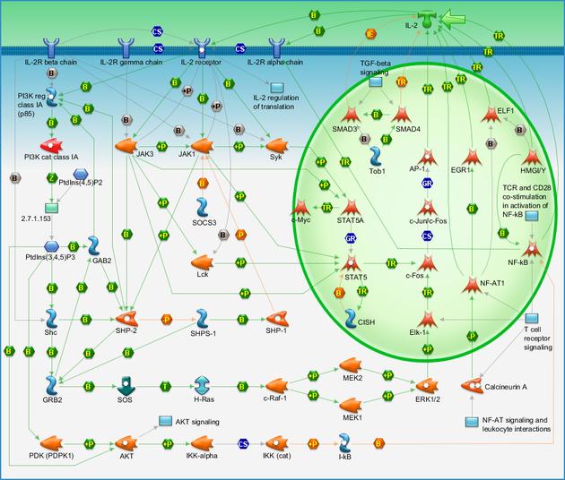 Immune response - IL-2 activation and signaling pathway ... on phosphatidylinositol 3-kinase pathway, insulin pathway, jak 1 2 3 signaling pathway, pi 3-kinase pathway, adenylate cyclase pathway, il-6 signaling pathway, thyroid pathway,