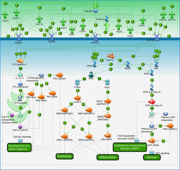 Development Fgf Family Signaling Pathway Map Primepcr
