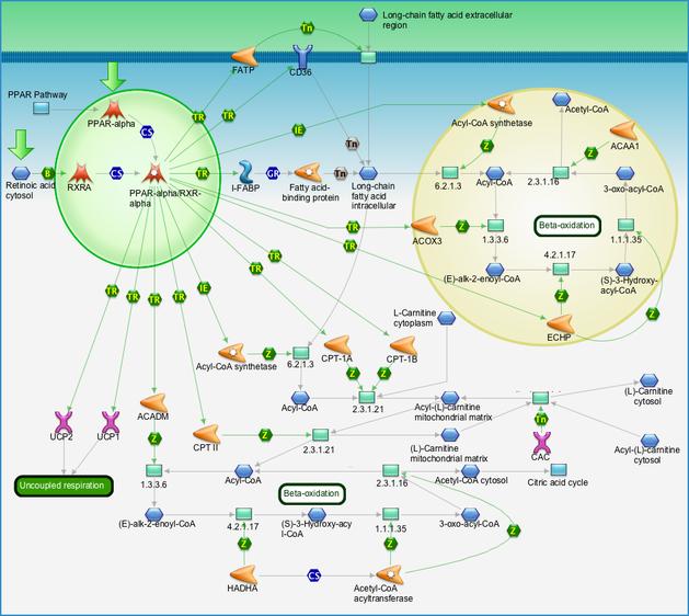 Regulation of lipid metabolism PPAR regulation of lipid metabolism