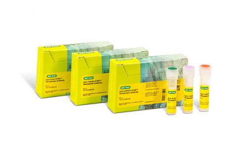 hFAB Rhodamine Housekeeping Protein Fluorescent Primary Antibodies