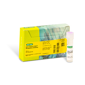 hFAB™ Rhodamine Anti-Tubulin Antibody, 200 µl