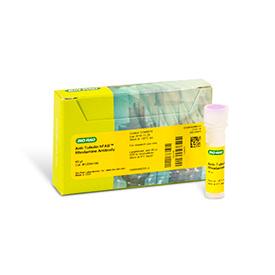 hFAB™ Rhodamine Anti-Tubulin Antibody 40 µl