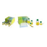 Bio-Plex Pro Human Acute Phase 4-Plex Panel Complete Kit #171-A4C09M